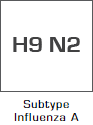 Subtype Influenza A - H9N2